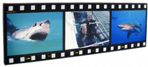 Filmstrip montage canvas print displaying shark images