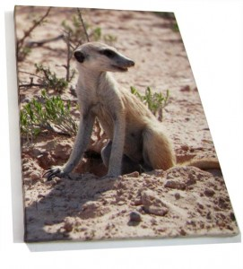 Meerkat on sand on a photo canvas print