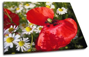 Poppy and white flowers on photo canvas print