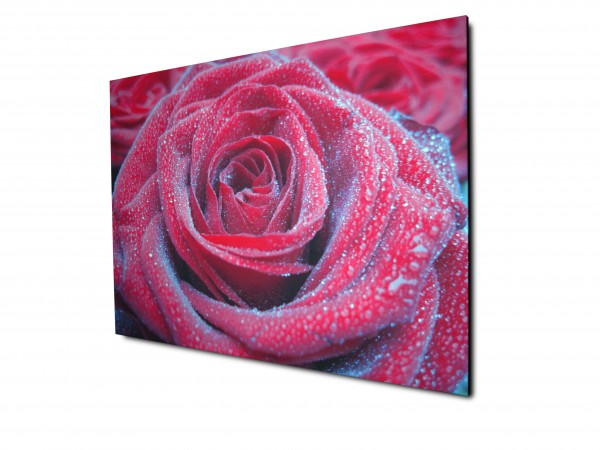 Red rose on a photo canvas print