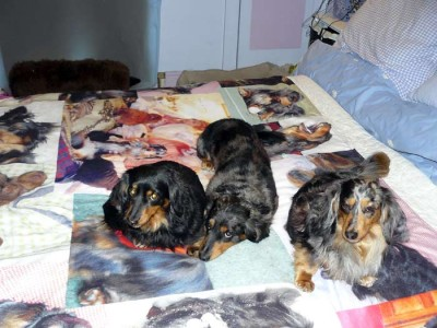 Dogs resting on photo blanket