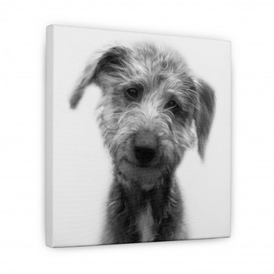 Inimitable personalised gifts canvas print of dog B&W