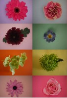 blooming-marvellous-competition-cut-out-flowers