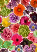 blooming-marvellous-competition-flower-print