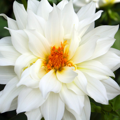 16 Weird And Wonderful Facts About Flowers Gift Ideas Blog