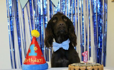 Dog birthday party header