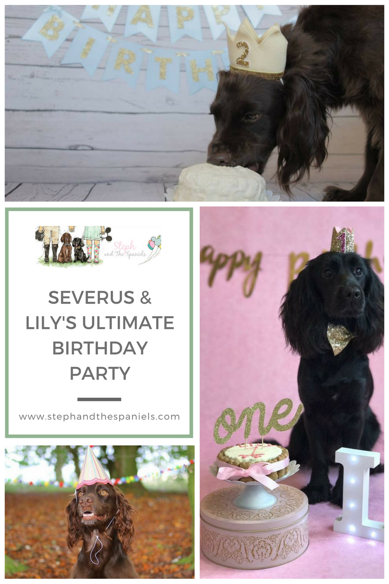 Steph and the Spaniels birthday photos