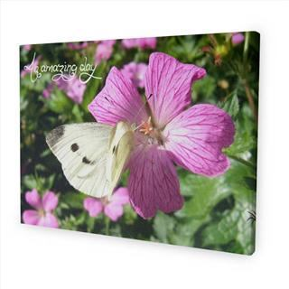 personalised message canvas nature wildlife butterfly